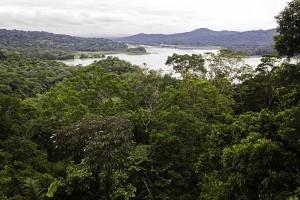 foresta bassa