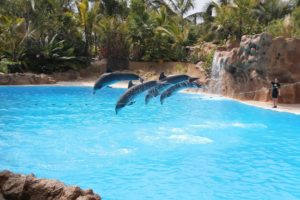 Visitare l'isola di Tenerife in 5 tappe