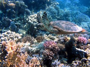 Cosa fare e vedere in vacanza a Sharm el-Sheikh