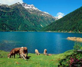 Trentino Alto Adige: sciare, passeggiare e visitare