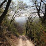 La via degli Dei: storia, natura, cultura e enogastronomia