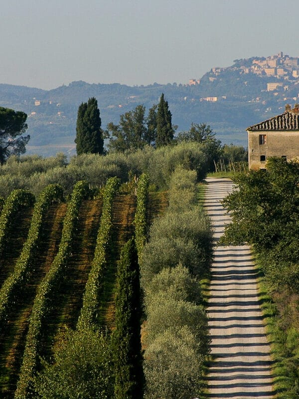 4 motivi per visitare Montepulciano: i vigneti